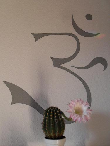 Echinopsis eyriesii Blüte weiß-2m