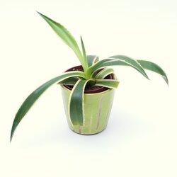 feng shui energiepflanzen zimmerpflanzen zierpflanzen kan yu ihr. Black Bedroom Furniture Sets. Home Design Ideas