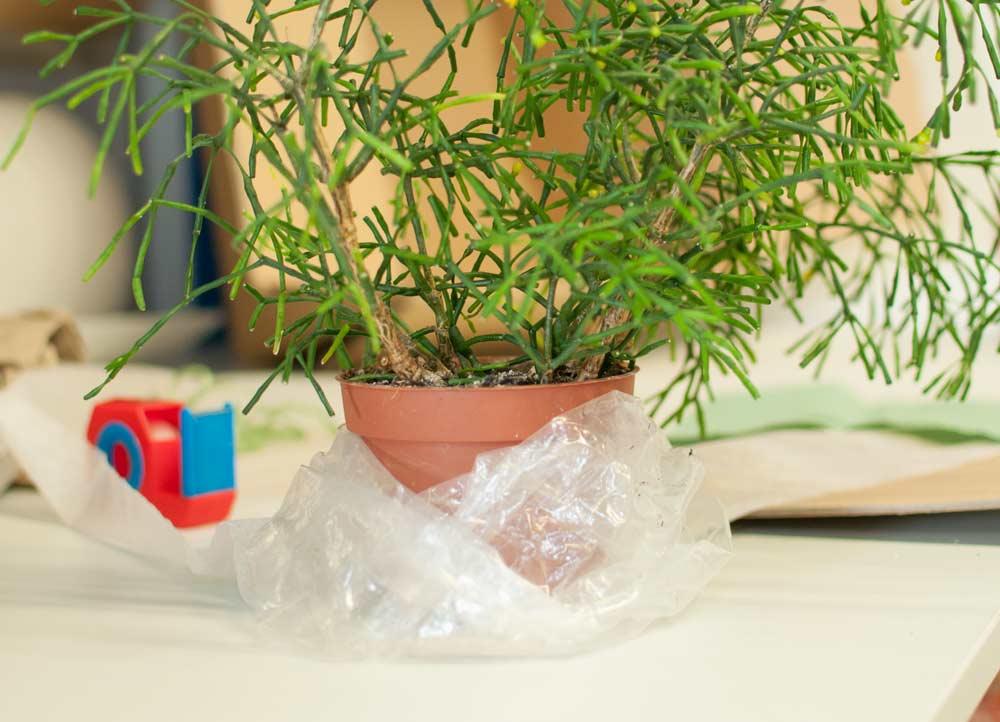 Pflanzenversand 02